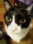今日のネコちゃんかわいい画像