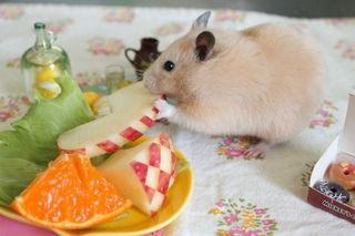 お食事中のハムスターかわいい画像1