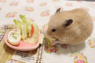 お食事中のハムスターかわいい画像2