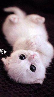 大きい目の子猫かわいい待ち受け画像11